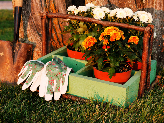 Some fall gardening tips before the snow falls