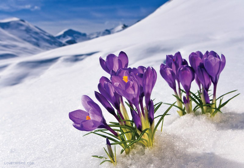 A cold Spring = ???