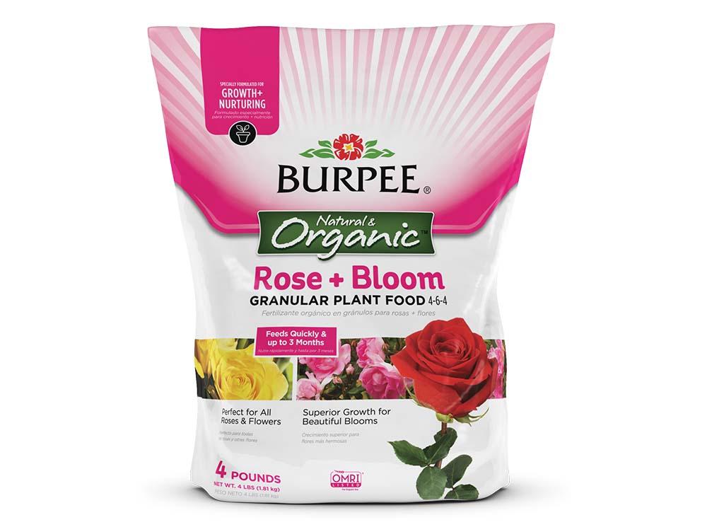 Burpee_Rose_4lb-3