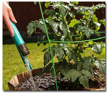 Watering 101 for your vegetable garden