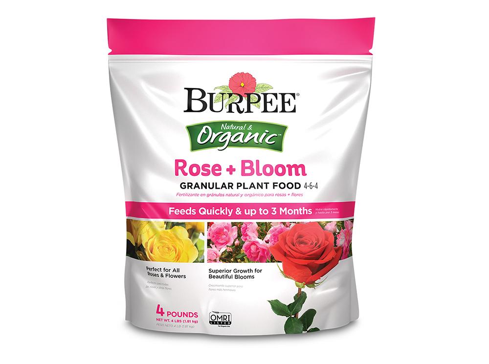 Burpee-Rose