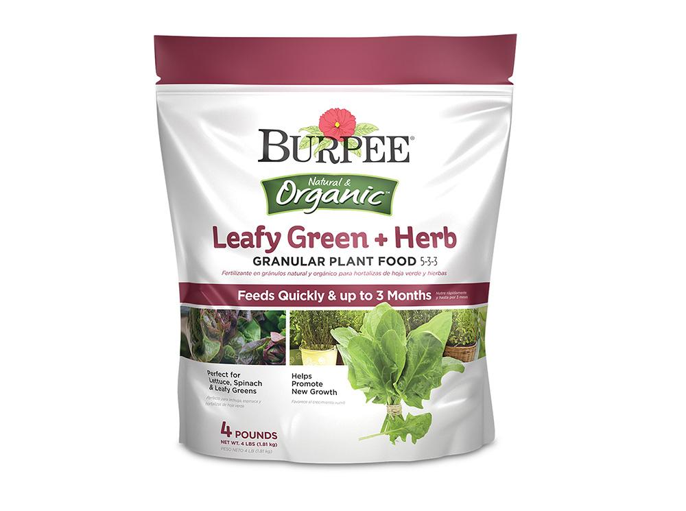 Burpee-leafy-green