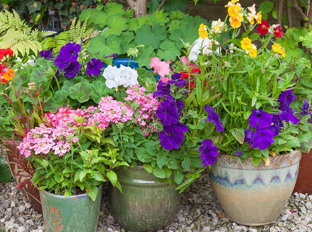 Burpee-raised-garden-flower-pots
