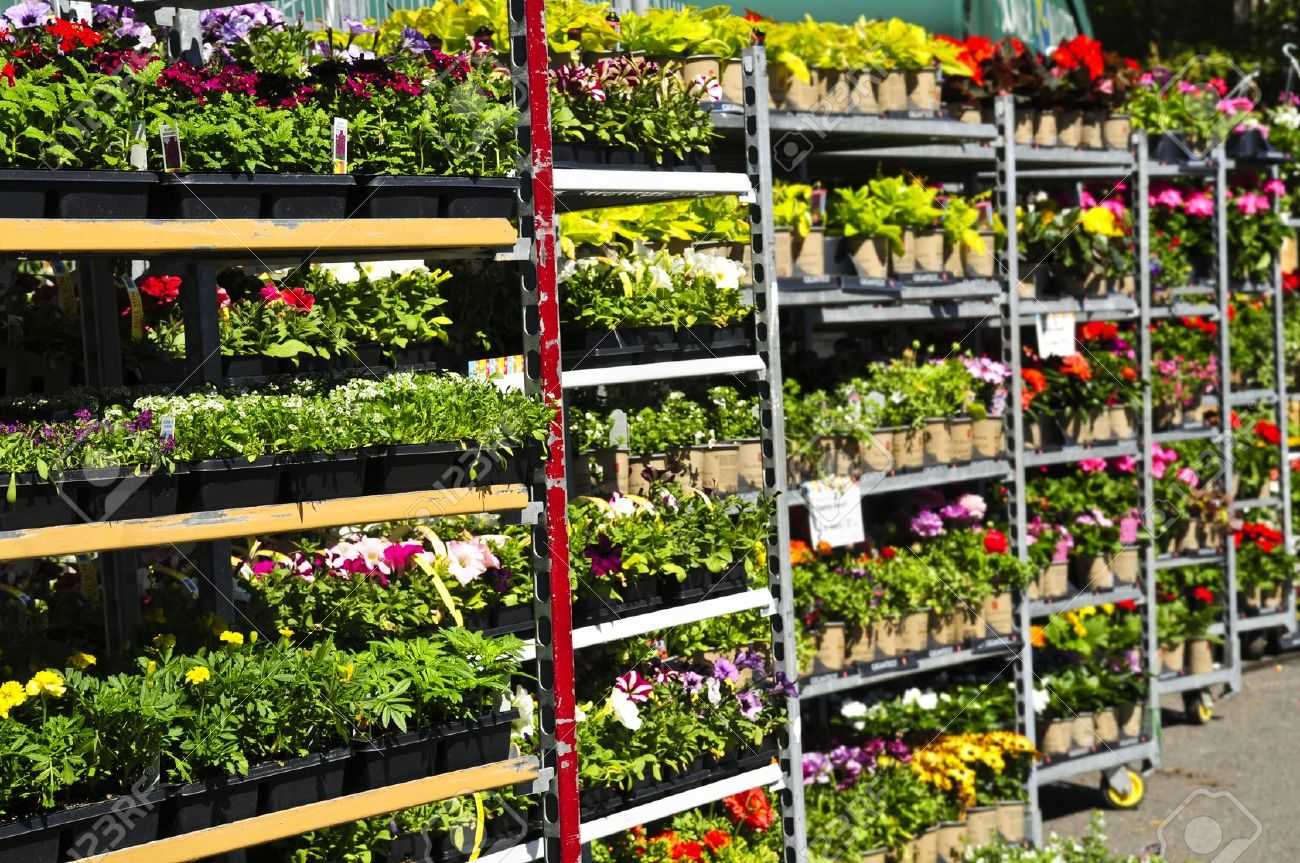 Spring 2016 finally imc outdoor living for Plants for sale