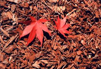 Rubberific%20Mulch%20-%20Mulch%20with%20Leaves.jpg