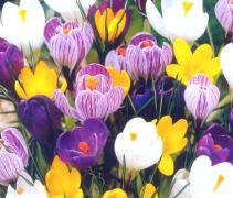 spring%20flowers.jpg